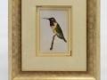 800x600_kolibri.jpg